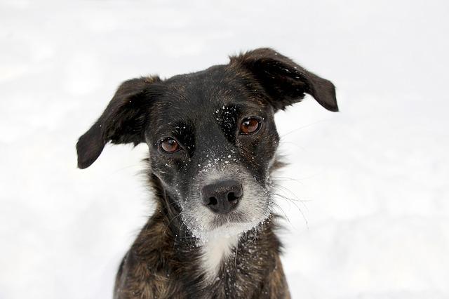 Tipps zu Wolfsblut Hundefutter