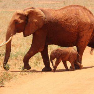 Tierschutzprojekte unterstützen – weltweite Hilfe für Tiere
